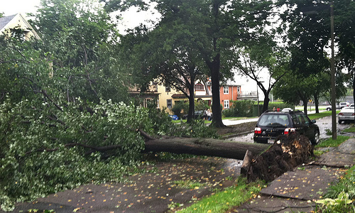 storm damage, tree damage, ostvig tree care