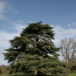 Helpful Tips for Mature Tree Care