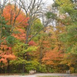 Trees, Shrubs and Bushes: Your Fall Color Guide