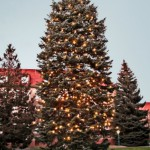 All Things Christmas: How to Care For and Buy Trees