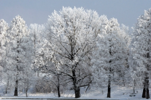 How to Prevent Ice Damage: The Importance of Tree Pruning & Selection