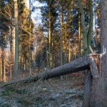 The Dangers of Hidden Storm Damage: Avoiding Tree Disease and Structural Uncertainty