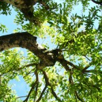 Top 3 Leaf Diseases and Pests to Treat This Summer