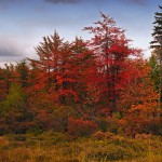 Beyond Tree Care: National Forests in Minnesota