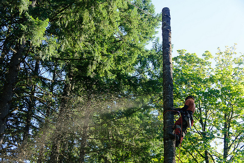 How to Choose the Best Certified Arborist