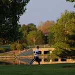 Top 5 Reasons to Add Trees to Your Corporate Campus