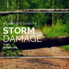Complete Guide to Storm Damage