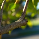 Avoid These Common Tree Pruning Mistakes