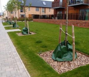 tree watering bags