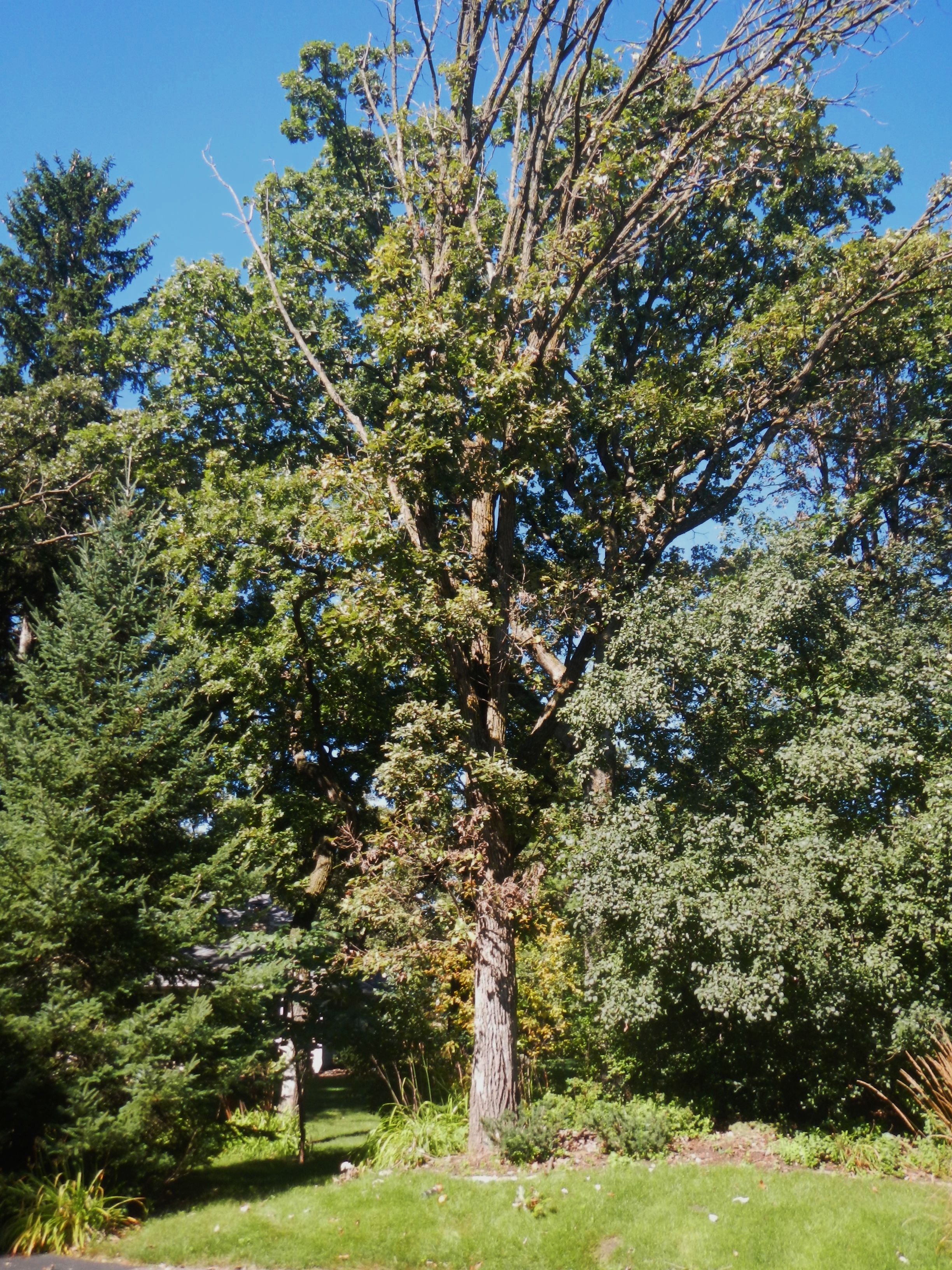 Trends in Tree Care Incidents (2015)