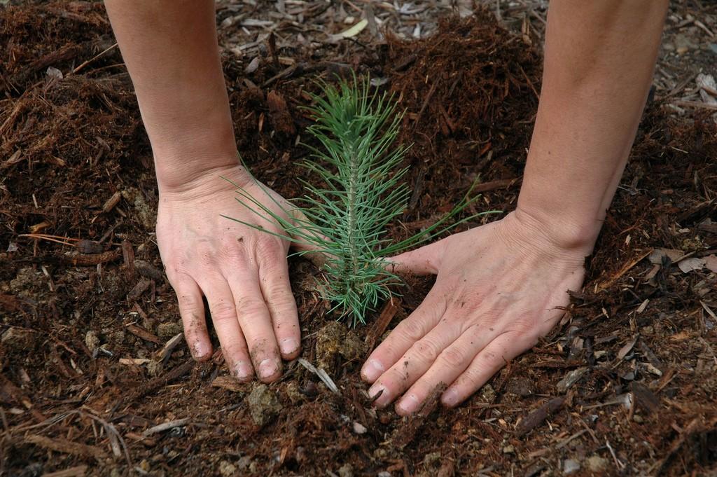 tree planting twin cities st. paul minnessota minneapolis