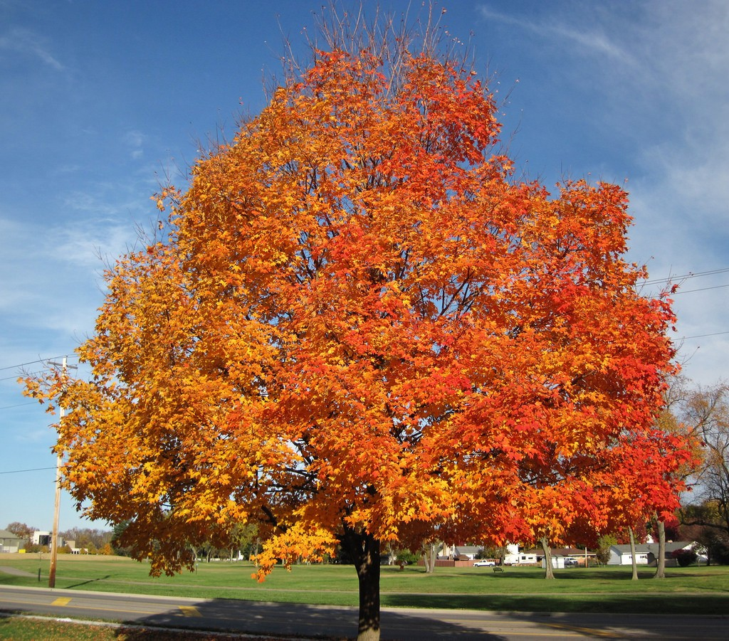 value of healthy trees