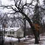 Tree and Shrub Inventories