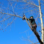 The Best Seasons for Tree Pruning & Trimming