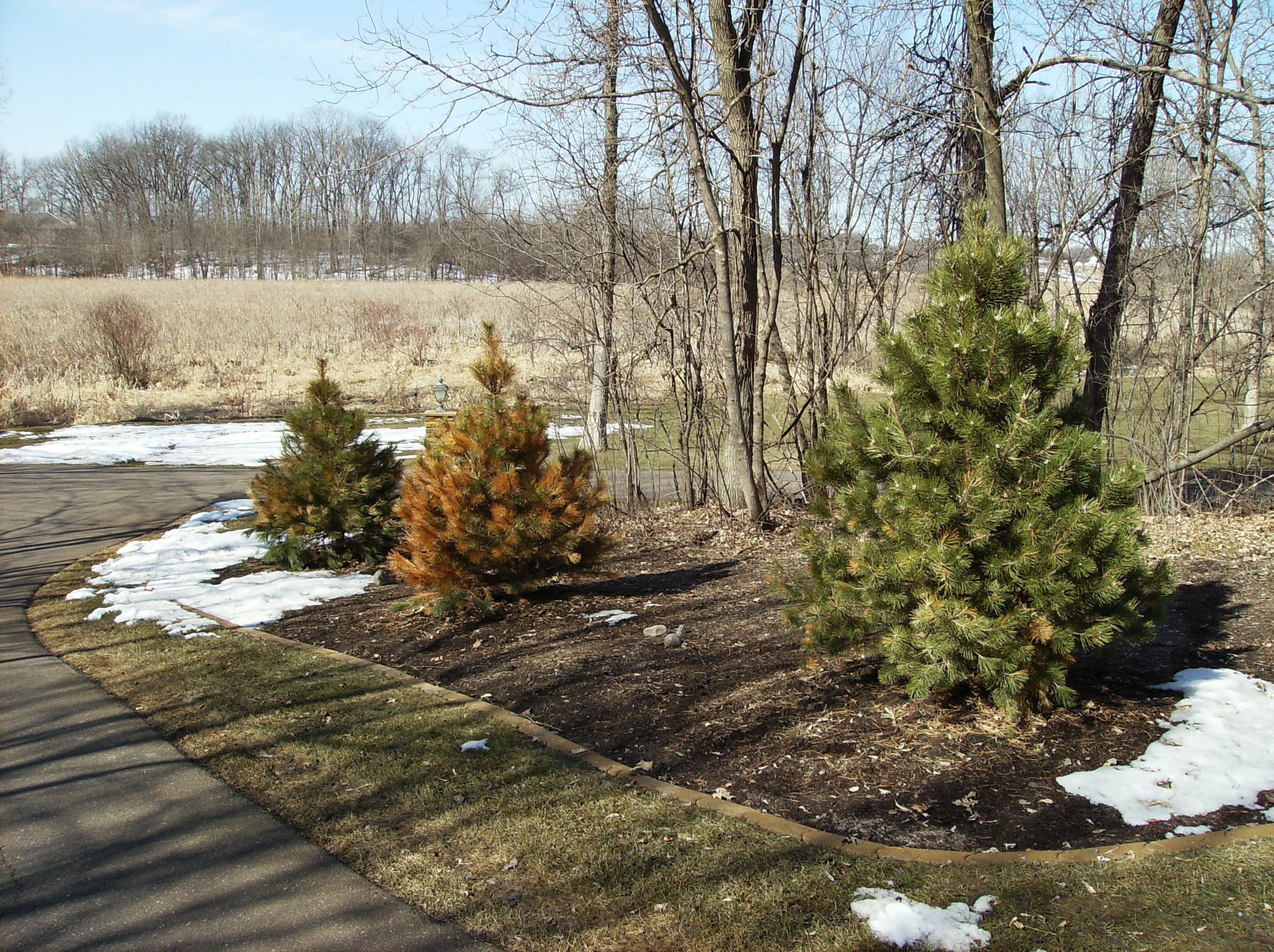 Tree's Environment
