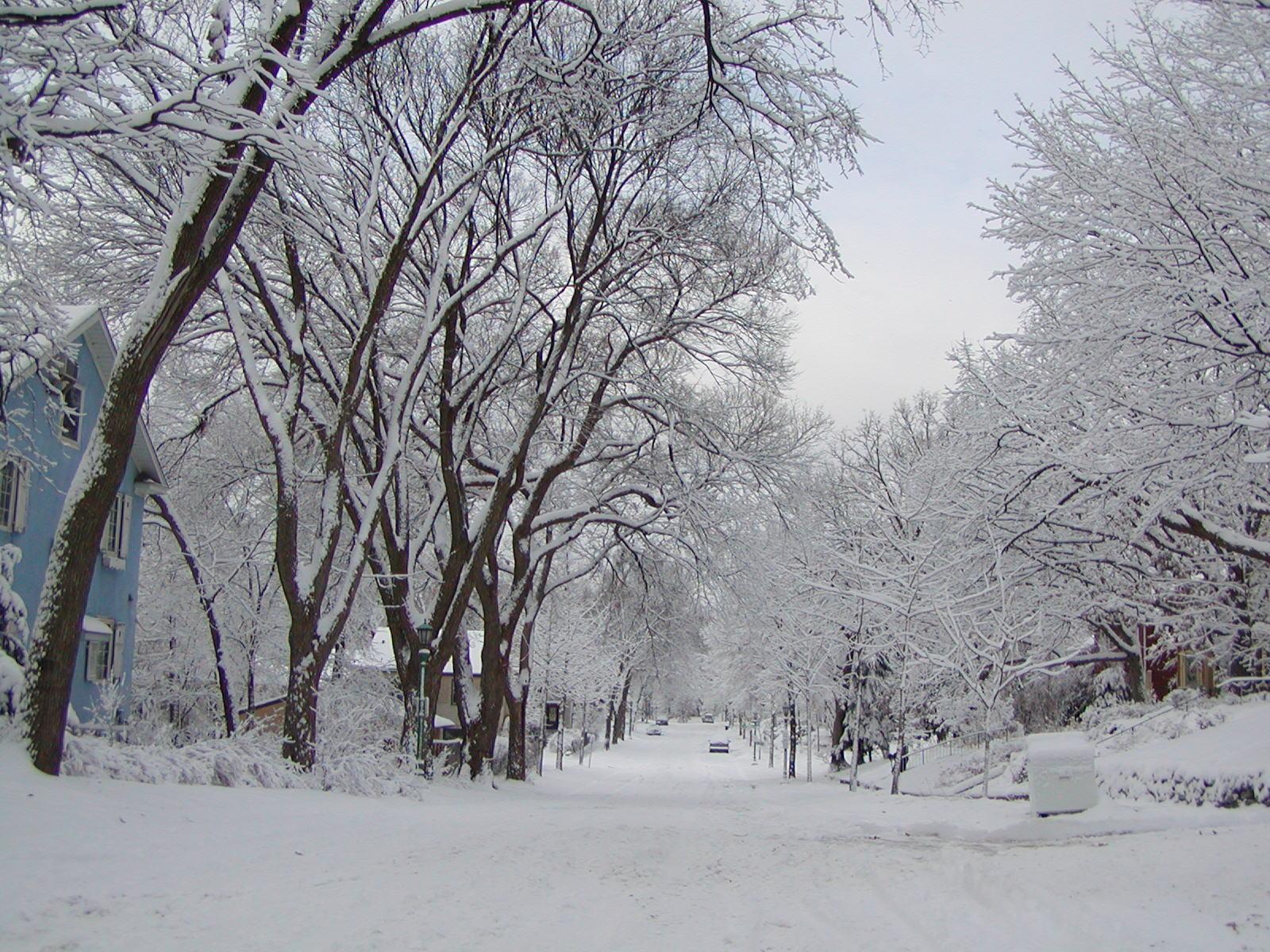 Winter Trees in St. Paul