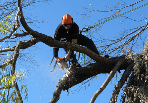 3 Tree Services that Add Value to Your Property