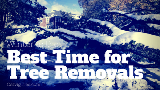 Minnesota Winter is the Best Time for Tree Removals