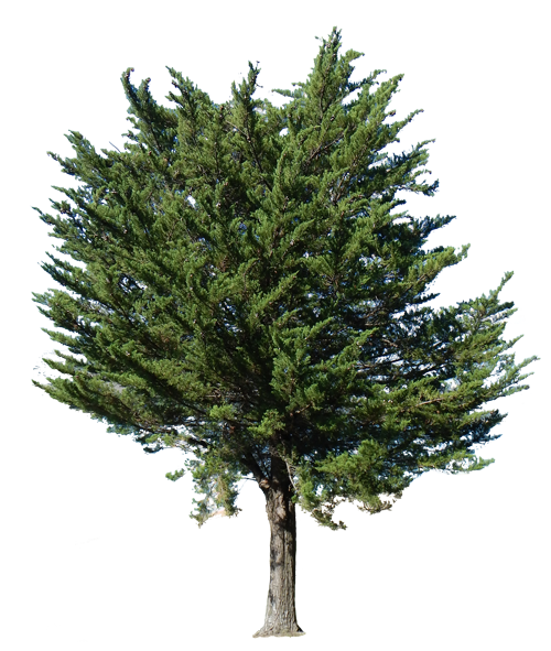 Ostvig Tree Care Services Shorewood