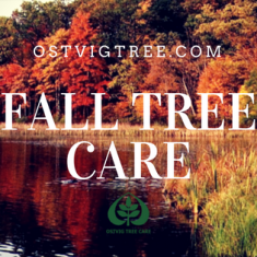 Fall Tree Care