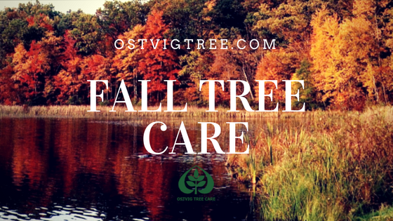 Tree Care Fall Pruning Minneapolis St. Paul Wayzata Edina Mahtomedi