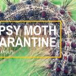 Gypsy Moth Quarantine in Minneapolis