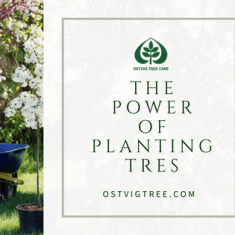The Power of Planting a Tree