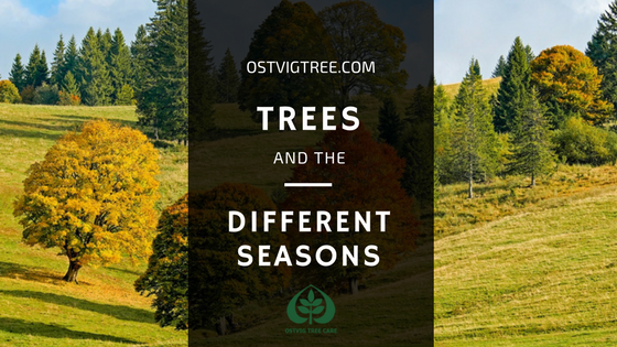 TREES AND THE DIFFERENT SEASONS
