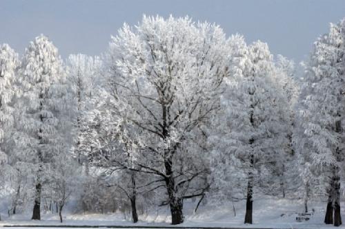 emerald ash borer, polar vortex, polar vortex and trees