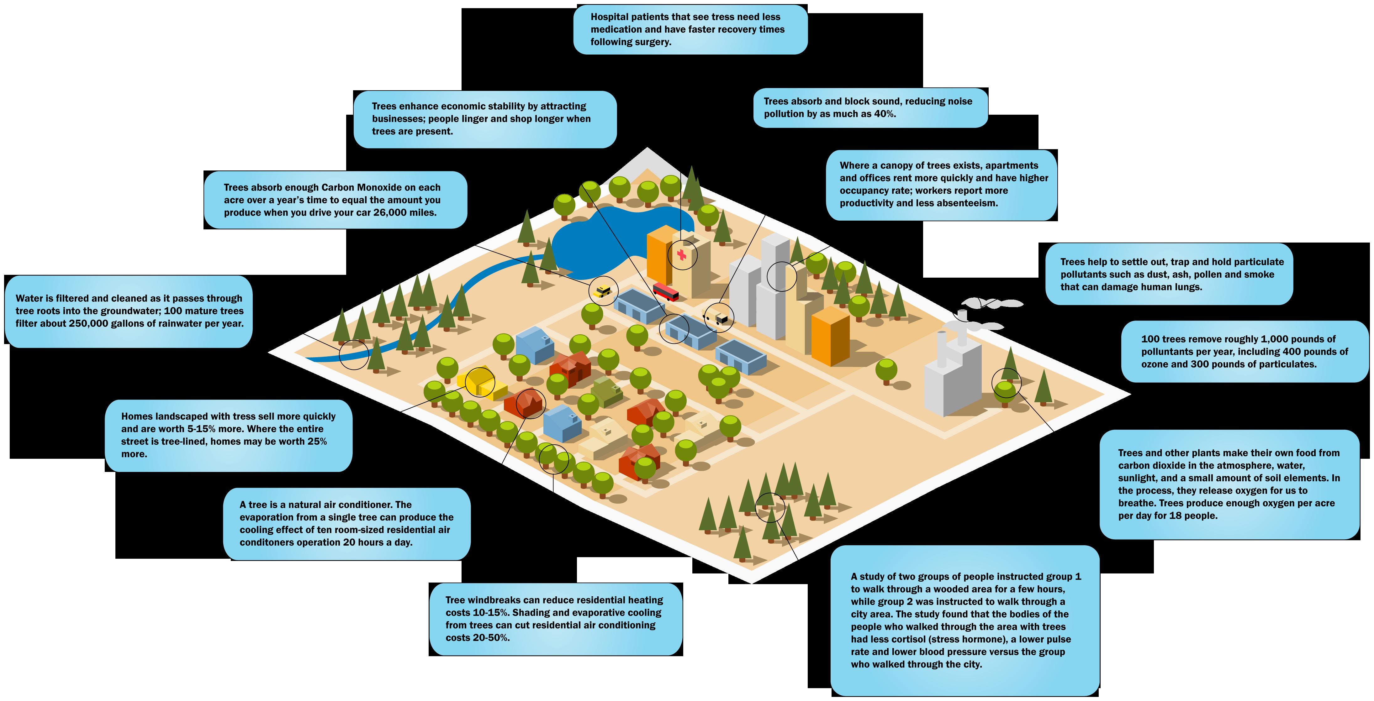 ostvig tree invest infographic