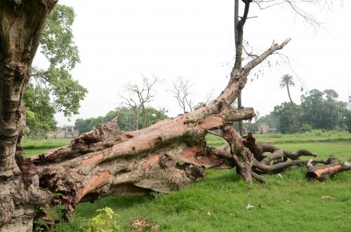 tree damage, fallen tree, property damage