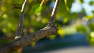tree pruning mistakes