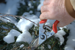 Winter Pruning Minneapolis St. Paul Wayzata