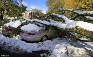 Winter Tree Removal Minneapolis St. Paul Wayzata