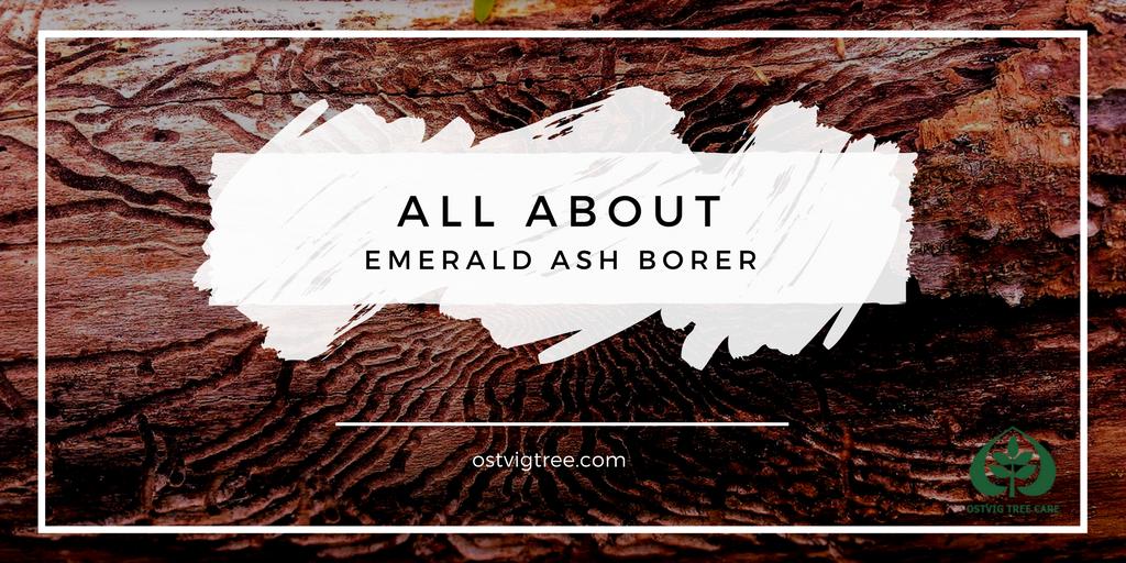 Emerald Ash Borer EAB Minneapolis St. Paul Wayzata Edina Dellwood Eden Prairie Deephaven