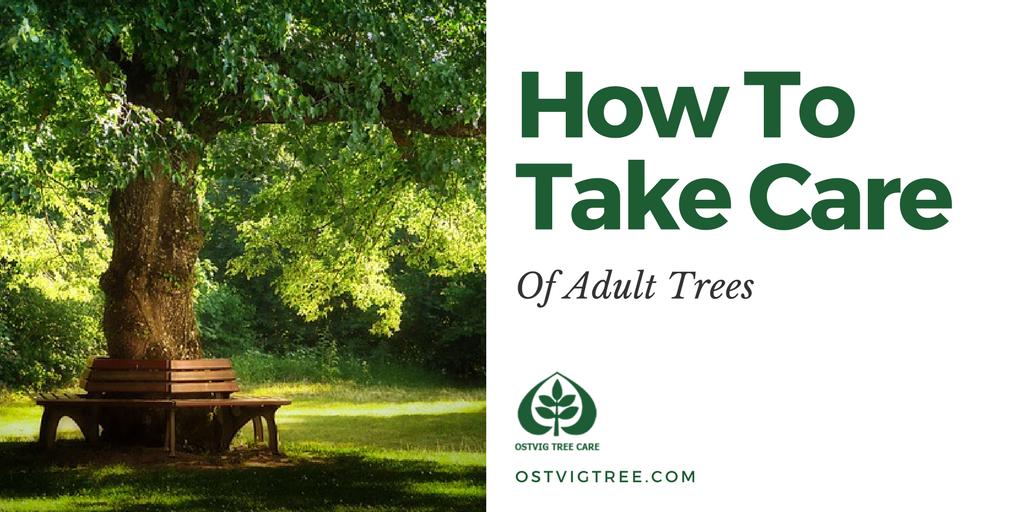 How To Take Care Of Trees Ostvig Tree