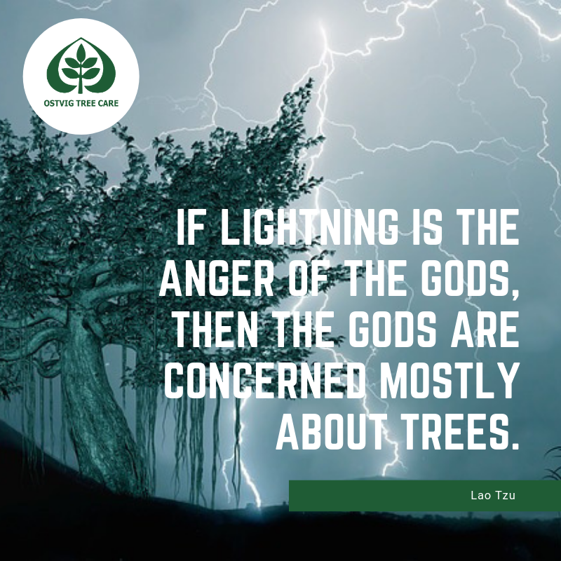 If lightning is the anger of the gods, then the gods are concerned mostly about trees.