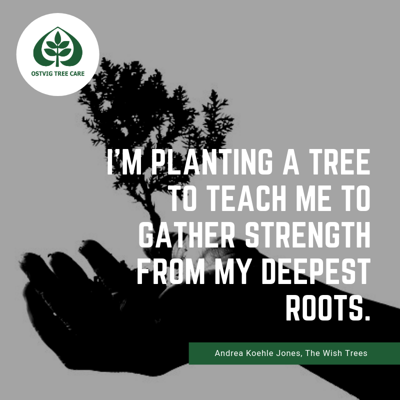 I'm planting a tree to teach me to gather strength from my deepest roots.