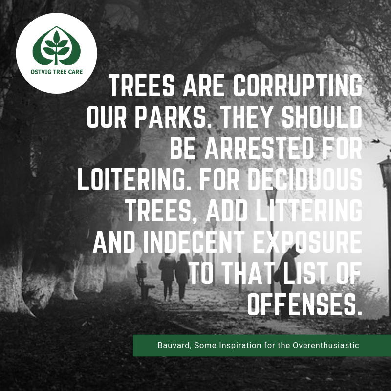 Trees are corrupting our parks. they should be arrested for loitering. for deciduous trees, add littering and indecent exposure to that list of offenses.