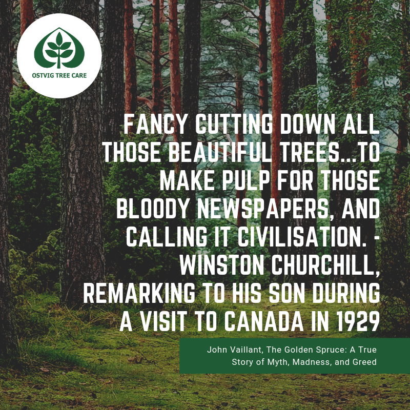 Fancy cutting down all those beautiful trees...to make pulp for those bloody newspapers, and calling it civilisation. - winston churchill, remarking to his son during a visit to canada in 1929