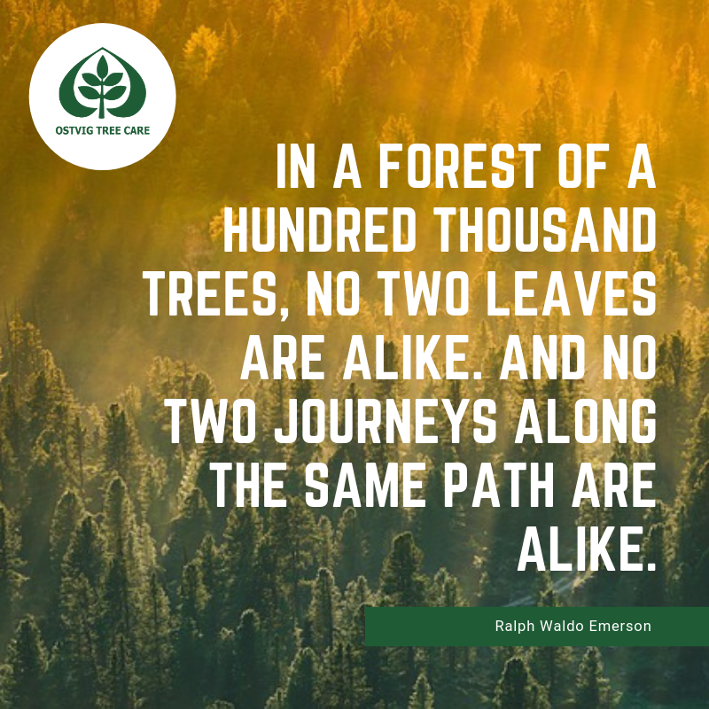 In a forest of a hundred thousand trees, no two leaves are alike. and no two journeys along the same path are alike.