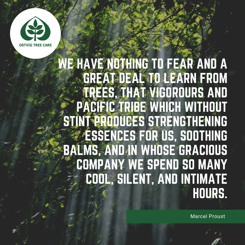 We have nothing to fear and a great deal to learn from trees, that vigorours and pacific tribe which without stint produces strengthening essences for us, soothing balms, and in whose gracious company we spend so many cool, silent, and intimate hours.
