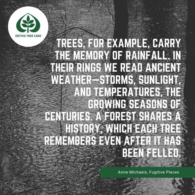 Trees, for example, carry the memory of rainfall. in their rings we read ancient weather—storms, sunlight, and temperatures, the growing seasons of centuries. a forest shares a history, which each tree remembers even after it has been felled.