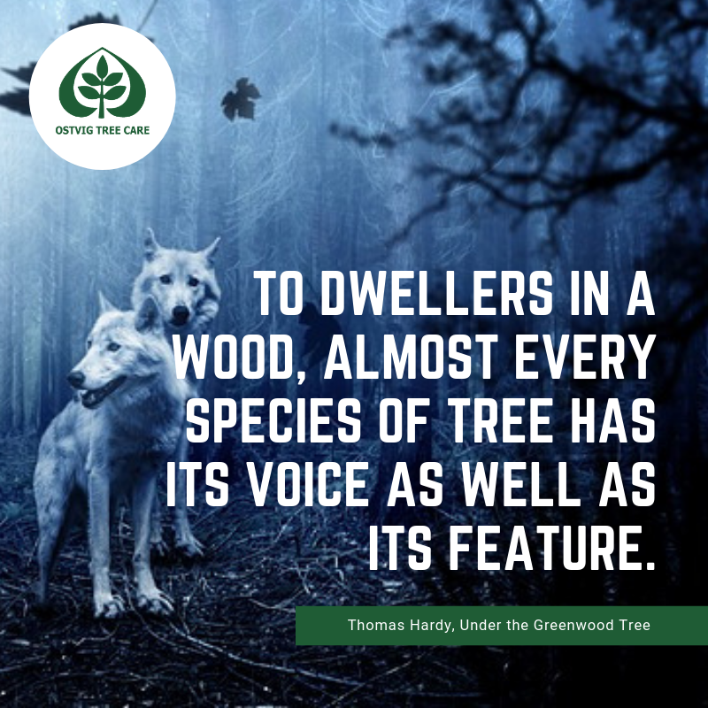 To dwellers in a wood, almost every species of tree has its voice as well as its feature.