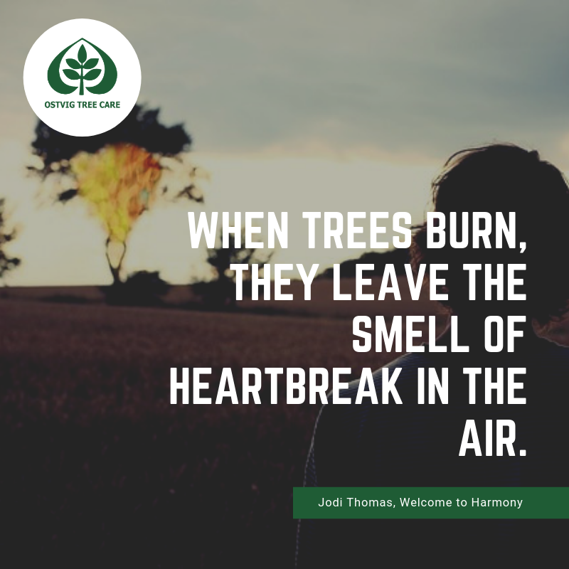 When trees burn, they leave the smell of heartbreak in the air.