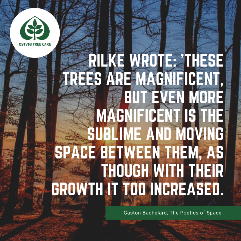 Rilke wrote: 'These trees are magnificent, but even more magnificent is the sublime and moving space between them, as though with their growth it too increased.'
