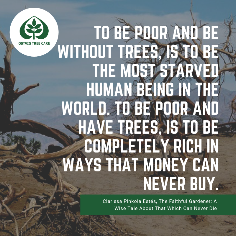 To be poor and be without trees, is to be the most starved human being in the world. to be poor and have trees, is to be completely rich in ways that money can never buy.