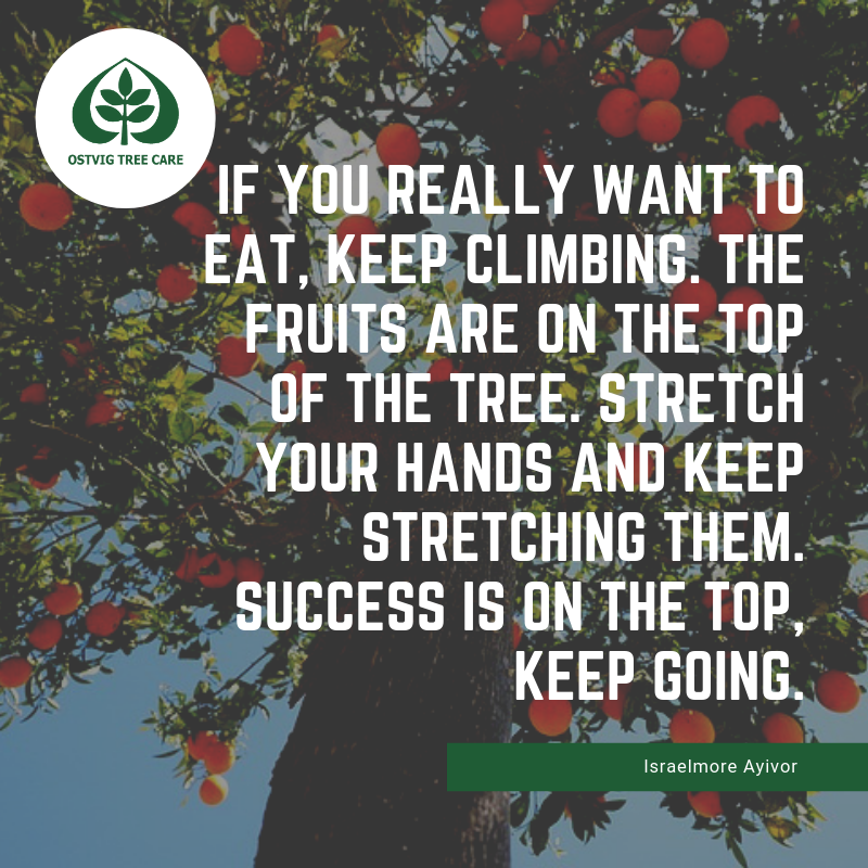If you really want to eat, keep climbing. the fruits are on the top of the tree. stretch your hands and keep stretching them. success is on the top, keep going.