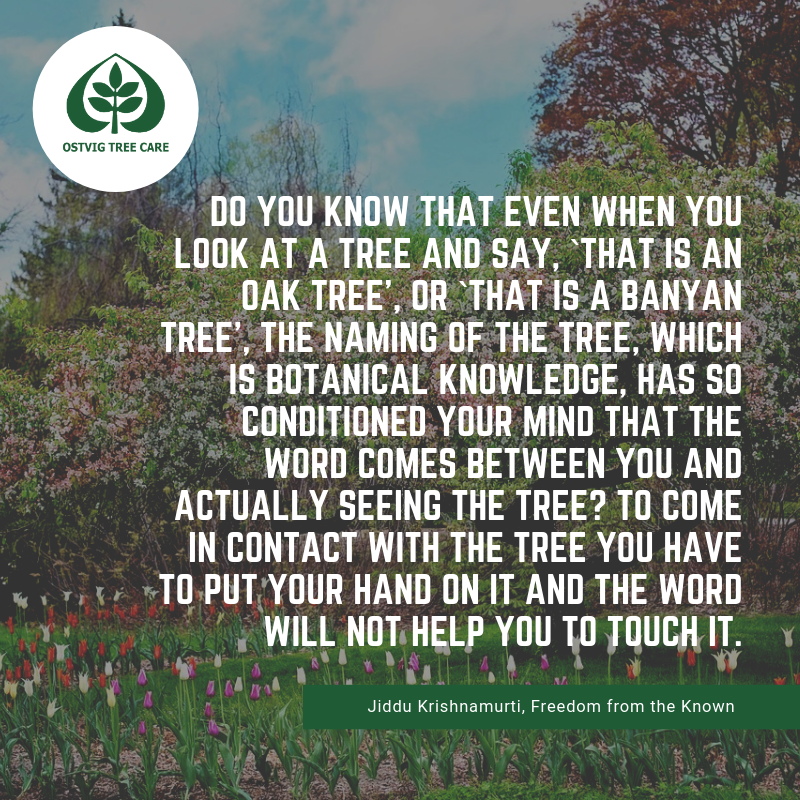Do you know that even when you look at a tree and say, `that is an oak tree', or `that is a banyan tree', the naming of the tree, which is botanical knowledge, has so conditioned your mind that the word comes between you and actually seeing the tree? to come in contact with the tree you have to put your hand on it and the word will not help you to touch it.