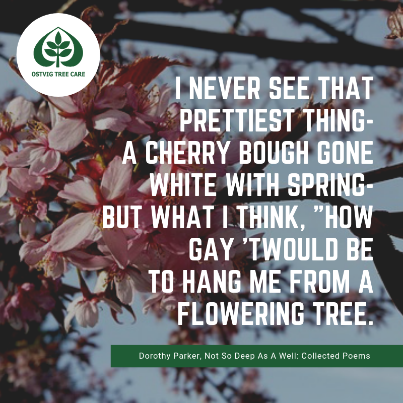 """I never see that prettiest thing- a cherry bough gone white with spring- but what i think, """"how gay 'twould be to hang me from a flowering tree."""